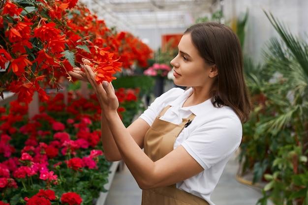 Zijaanzichtportret van glimlachende aantrekkelijke donkerbruine jonge vrouw die mooie rode en roze bloemen in grote moderne serre bewonderen. concept van wandelen in de kas en zorg voor planten.