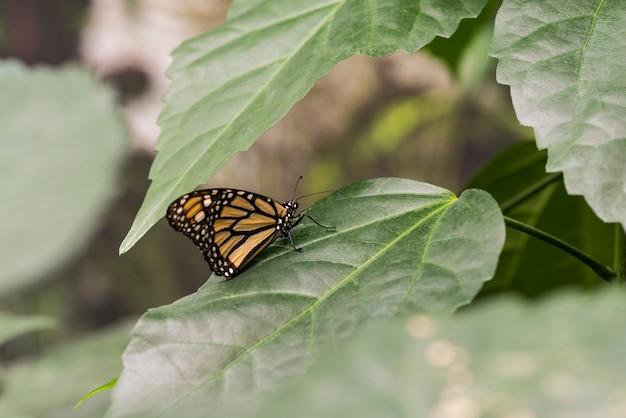Zijaanzichtvlinder op bladeren