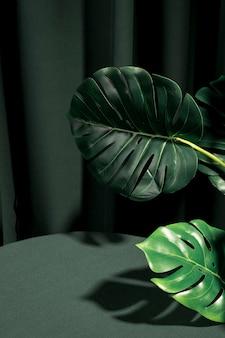 Zijwaarts monstera plant naast een tafel