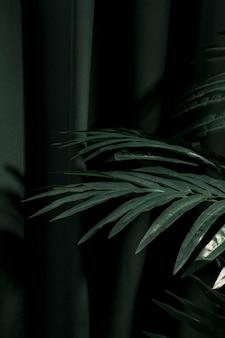 Zijwaarts palmbladeren naast gordijn