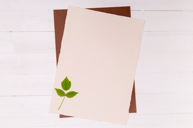 Zilverberk kleine bladeren op exemplaarruimteoppervlak
