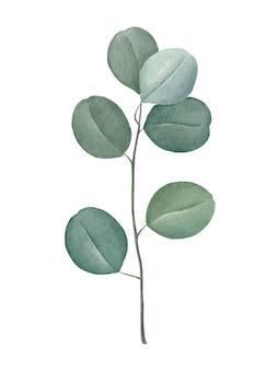 Zilveren dollar eucalyptustak. hand getekend aquarel illustratie geïsoleerd in wit