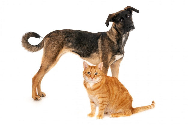 Zittende gemberkat en staande hond die samen stellen