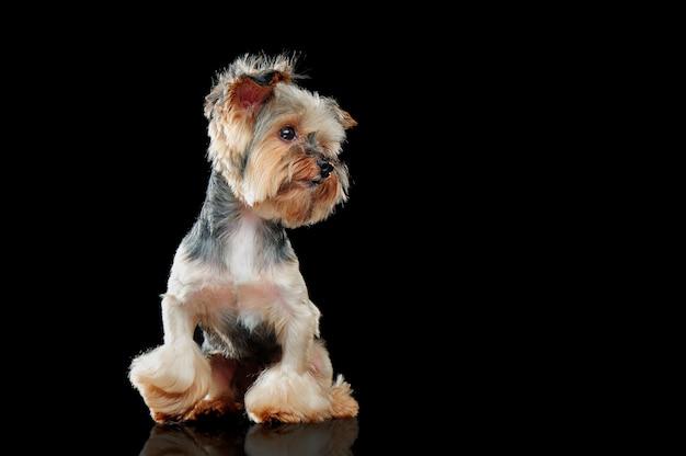 Zittende hond die aan de geïsoleerde kant kijkt