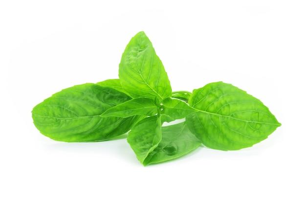 Zoet basilicumkruid groeien in een biologische tuin. thais basilicumblad dat op witte achtergrond wordt geïsoleerd.