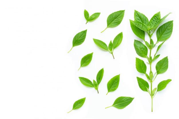 Zoete basilicumbladeren op wit
