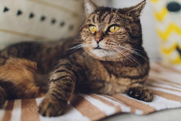 Zoete gouden kat liggend op de bank