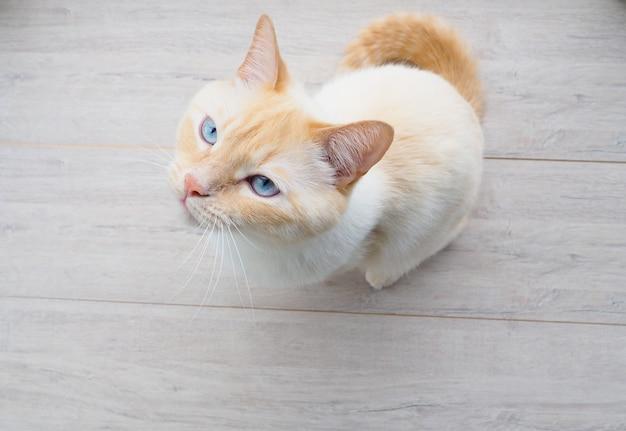 Zoete jonge witte kat met blauwe ogen speelt, rust, strekt zich uit