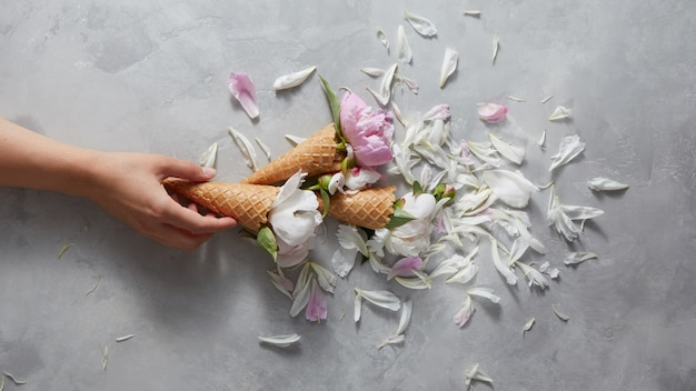 Zoete kegels in de hand van een vrouw met zachte roze en witte pioenroos bloemen, bloemblaadjes op een grijze betonnen achtergrond