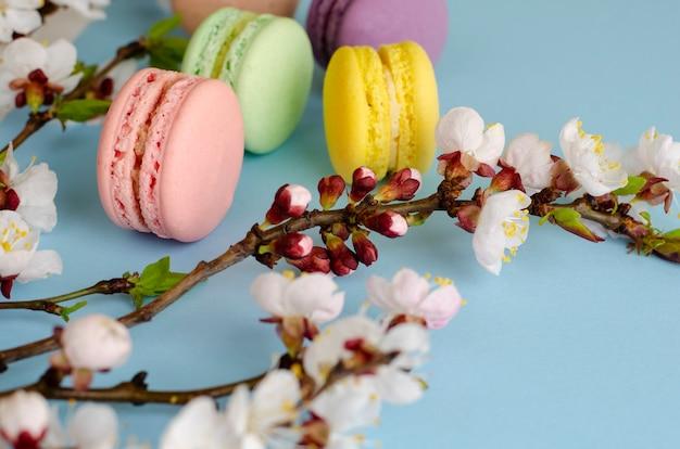 Zoete macarons of bitterkoekjes versierd met bloeiende abrikozenbloemen op pastelblauw