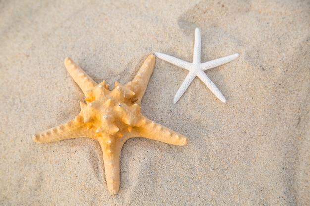 Zomer 2015 met starfish als vakantieactiviteit
