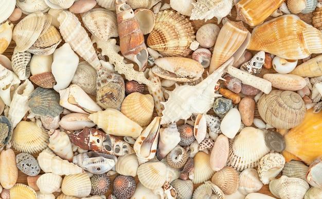 Zomer aard oppervlak van schelpen