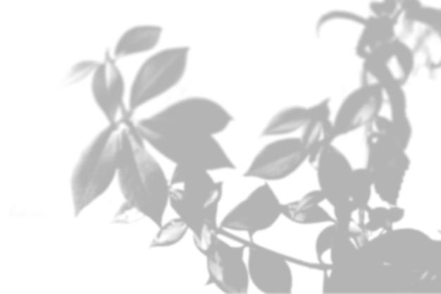 Zomer achtergrond van schaduwen van wilgentakken op een witte muur. wit en zwart voor het over elkaar heen plaatsen van een foto of mockup.