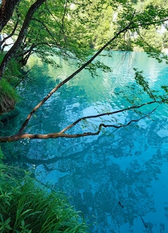 Zomer azuurblauwe heldere transparante meerzicht en weerspiegeling van de boom in het wateroppervlak (plitvice lakes national park, kroatië)