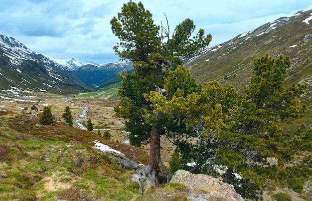 Zomer berglandschap met pijnbomen vooraan (fluela pass, zwitserland)