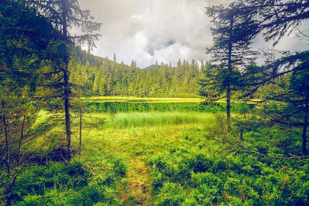 Zomer bergmeer bos