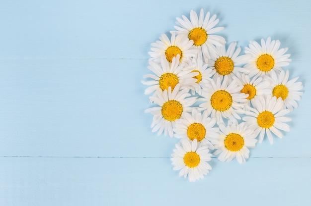 Zomer bloemen hart patroon met kamille daisy flower over blauwe vintage houten achtergrond. liefde concept. plat lag, bovenaanzicht