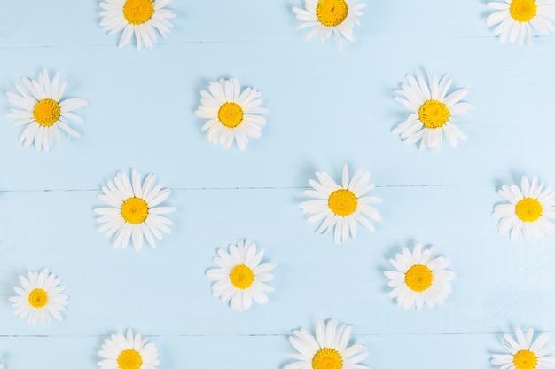 Zomer bloemmotief met kamille daisy flower over blauwe vintage houten achtergrond.