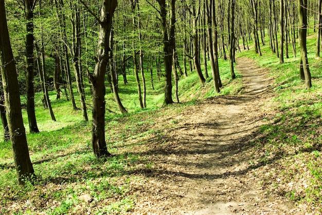 Zomer bos. natuur groen hout zonlicht.