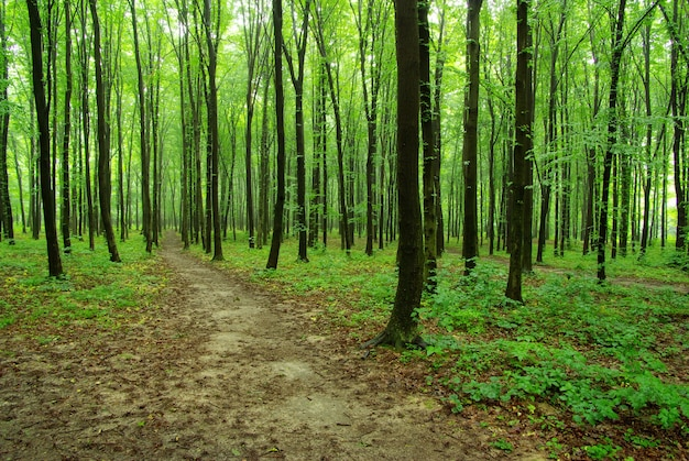 Zomer bos. natuur groen hout