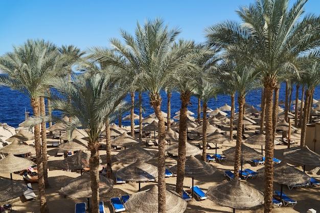 Zomer chaise lounges onder een parasol op zandstrand aan zee en palmen in hotel.
