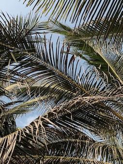 Zomer exotische tropische palmboom bladeren tegen blauwe hemel