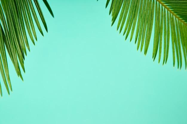 Zomer groene palm verlof achtergrond