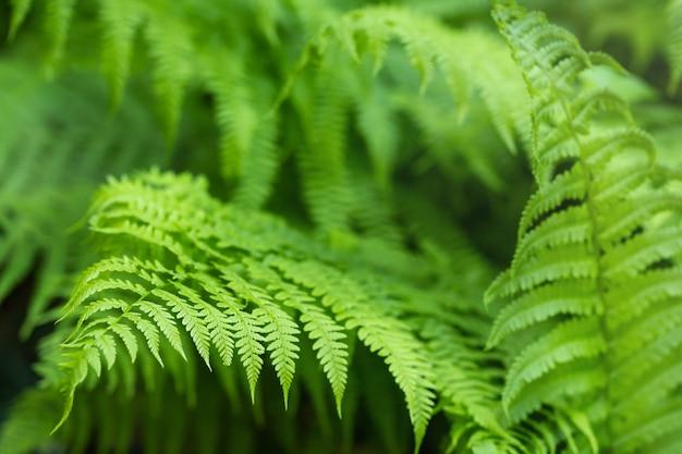 Zomer groene varenblad achtergrond