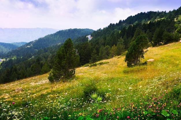 Zomer landschap met bergachtige weide. pyreneeën