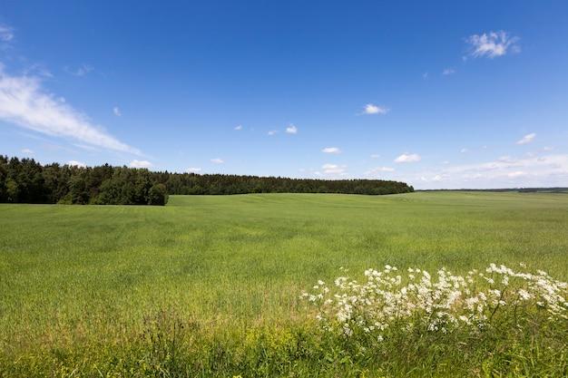 Zomer landschap met blauwe lucht en groen gras, midden van de zomer op het landbouwgebied