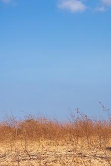 Zomer landschap met droog gras