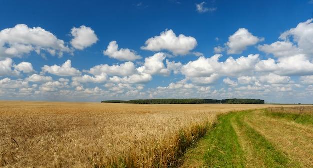 Zomer landschap met gouden tarweveld, weg, bossen en witte wolken Premium Foto