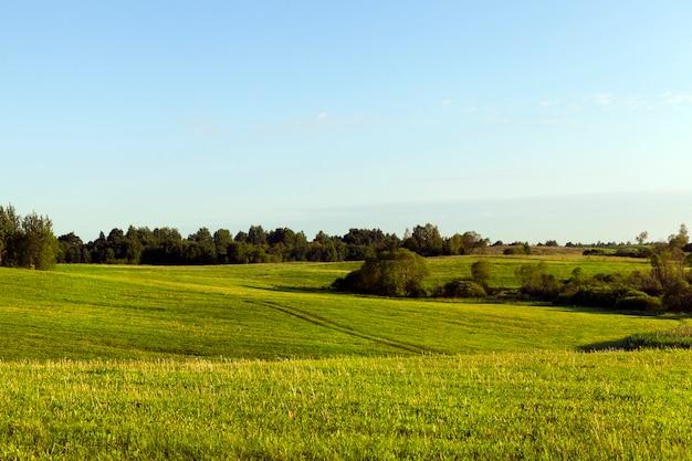 Zomer landschap met groen gras op de heuvels, prachtige europese natuur met blauwe lucht