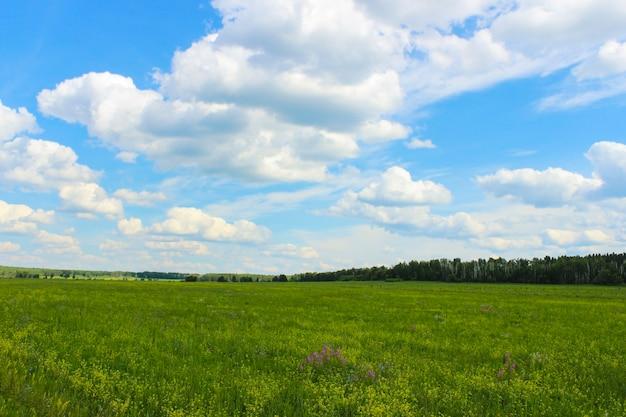 Zomer landschap met weide en lucht met wolken