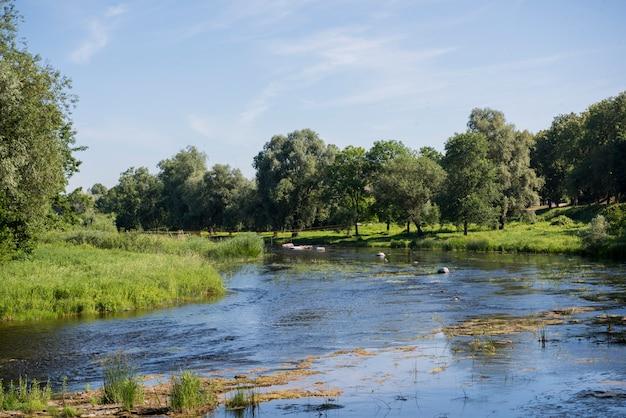 Zomer landschap. rivier in het bos op zonnige zomerdag.