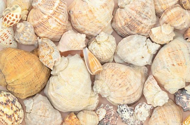 Zomer mariene oppervlak van schelpen