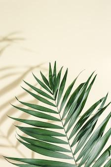 Zomer minimale achtergrond met natuurlijke groene palmbladeren met zon schaduwen o