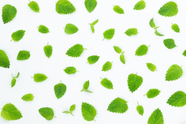 Zomer mint groen blad achtergrond