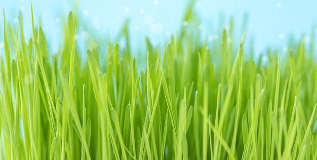Zomer oppervlak van groen gras lucht en zonlicht