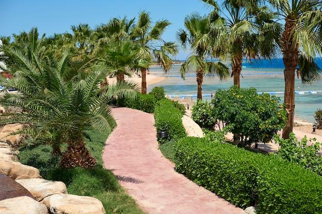 Zomer palmbomen op de promenade langs de kust met uitzicht op de rode zee