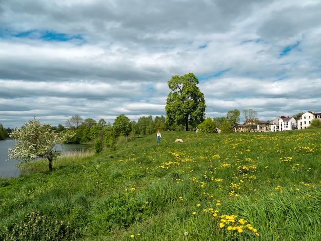 Zomer plattelandslandschap met groen gras, een grote boom en huisjes.