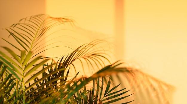Zomer reizen concept. de schaduw van exotische palmbladen legt op achtergrond van de pastelkleur de gele muur.
