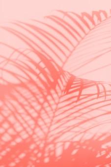 Zomer reizen concept. schaduw van exotische palmbladenachtergrond