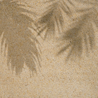 Zomer strand dag scène met tropische palmbladeren schaduw op zand achtergrondminimaal zonlicht tropisch