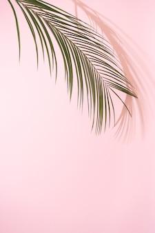 Zomer strand dag scène met tropische palmbomen schaduw op roze. minimaal zonlicht tropisch arrangement.