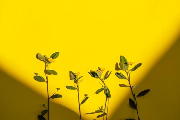 Zomer tropische compositie. groene bladeren en gele bloemen in de schaduw op een gele papieren achtergrond. zomerconcept. groene bladeren en gele bloemen geïsoleerd op een gele achtergrond