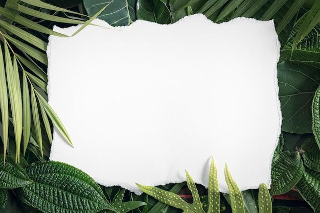 Zomer tropische mix verlaat achtergrond met blanco wit papier, bovenaanzicht, kopie ruimte