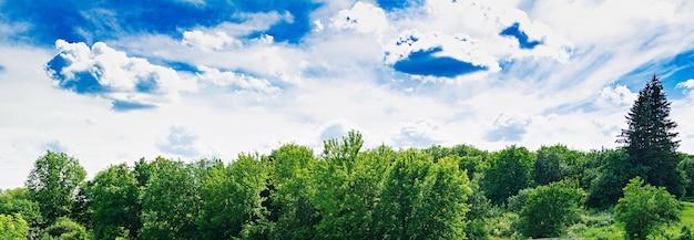 Zomer veld tegen de blauwe hemel. prachtig landschap.