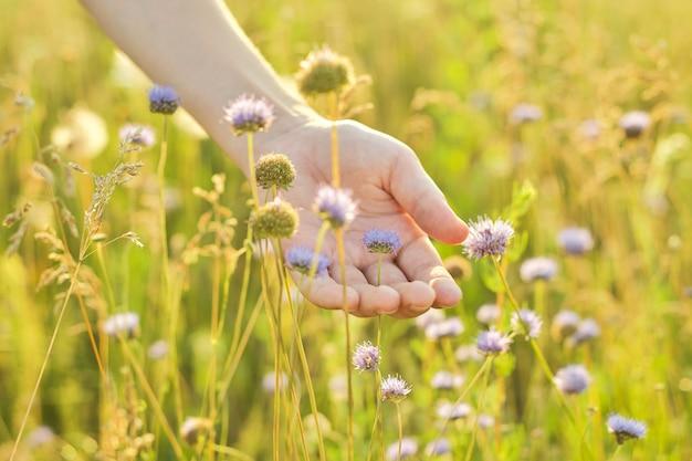 Zomer wild weidegras en bloemen in meisjeshand, close-up, natuur, ecologie, zomerseizoen