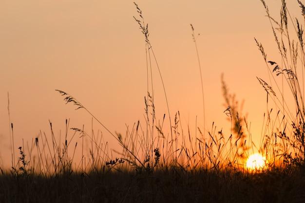 Zomer zonsondergang op weide.